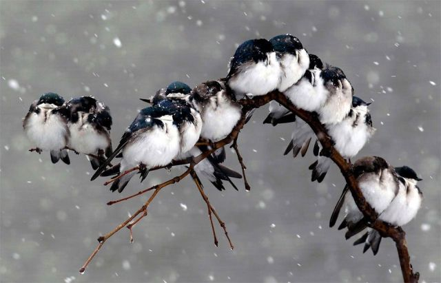birds-on-a-branch-during-a-snowstorm-photography-by-david-duprey