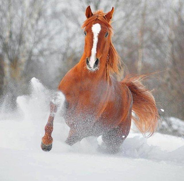 snowy-run-photography-by-olga-itina