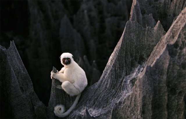 sifaka-lemur-stone-forest-madagascar-photography-by-steven-alwarez